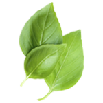 Basil Leaves Benefits, Basil Properties, Basil Information